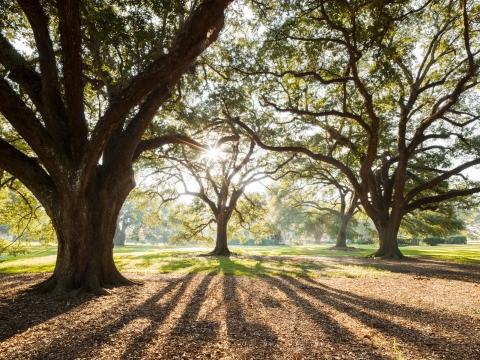SHRM TREES