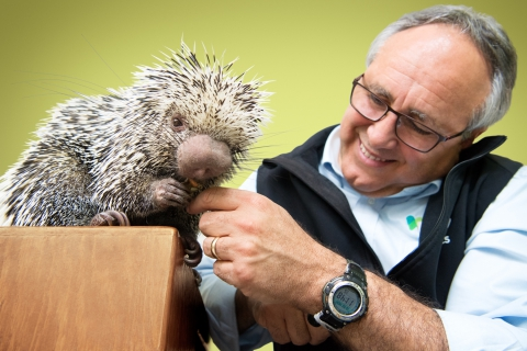Animal Planet, Discovery, Bronx Zoo - Porcupines