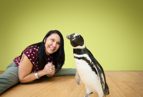 Animal Planet, Discovery, Bronx Zoo - Penguin